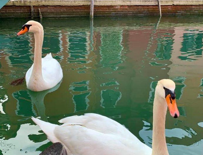 venezia pulita acque limpide
