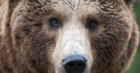 Bambino vs orso bruno
