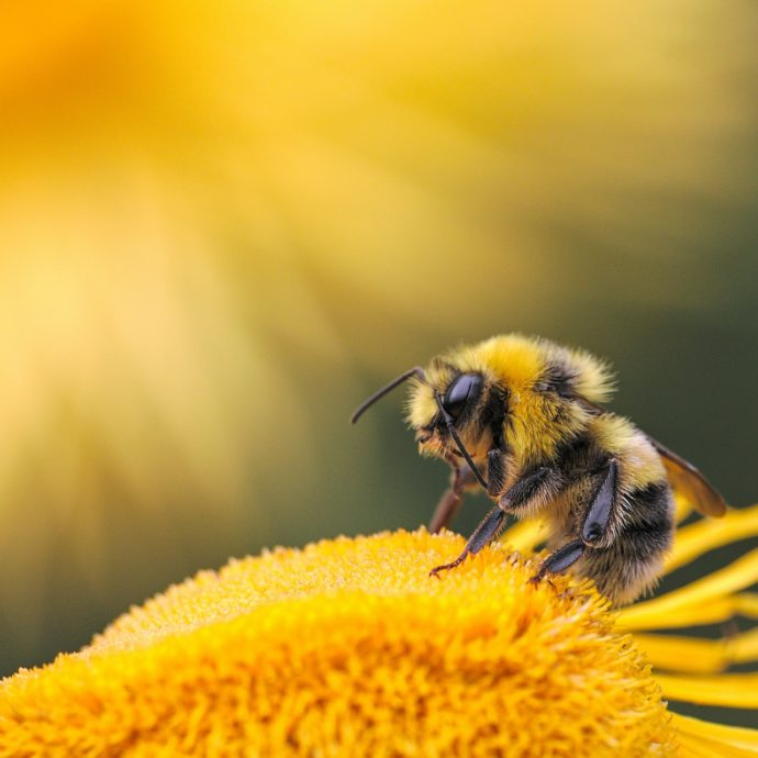 ape- insetto- polline valisena bug hotel