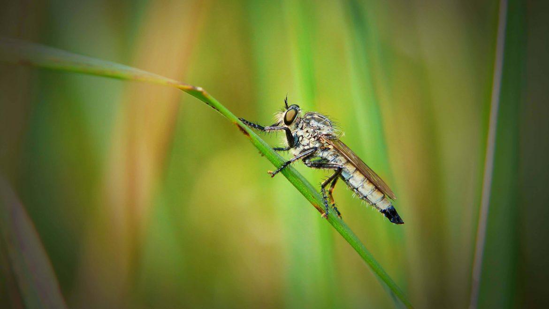 Tre consigli per eliminare in modo naturale le zanzare dal giardino