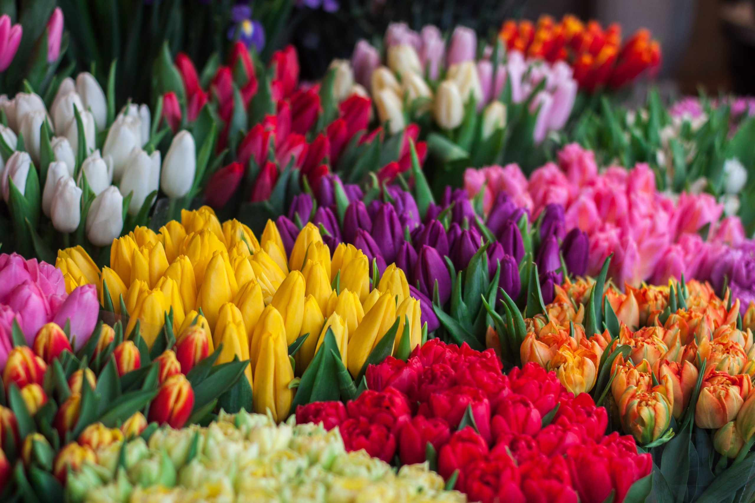 I fiori di Noto arrivano in via della Spiga a Milano